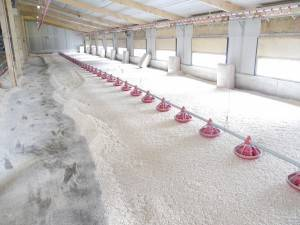 Poultry bedding in Staffordshire