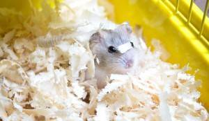 animal bedding for pets