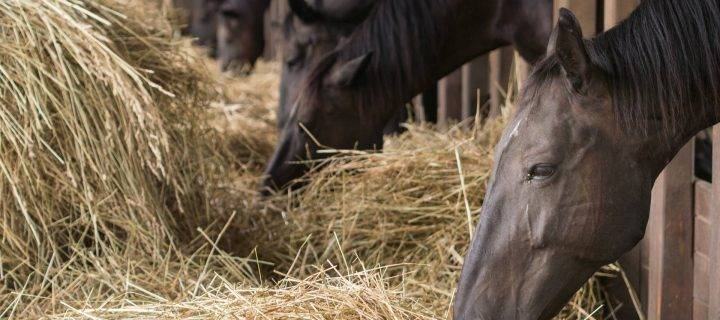 Protect Your Animals This Summer with Our Horse Bedding in Derbyshire