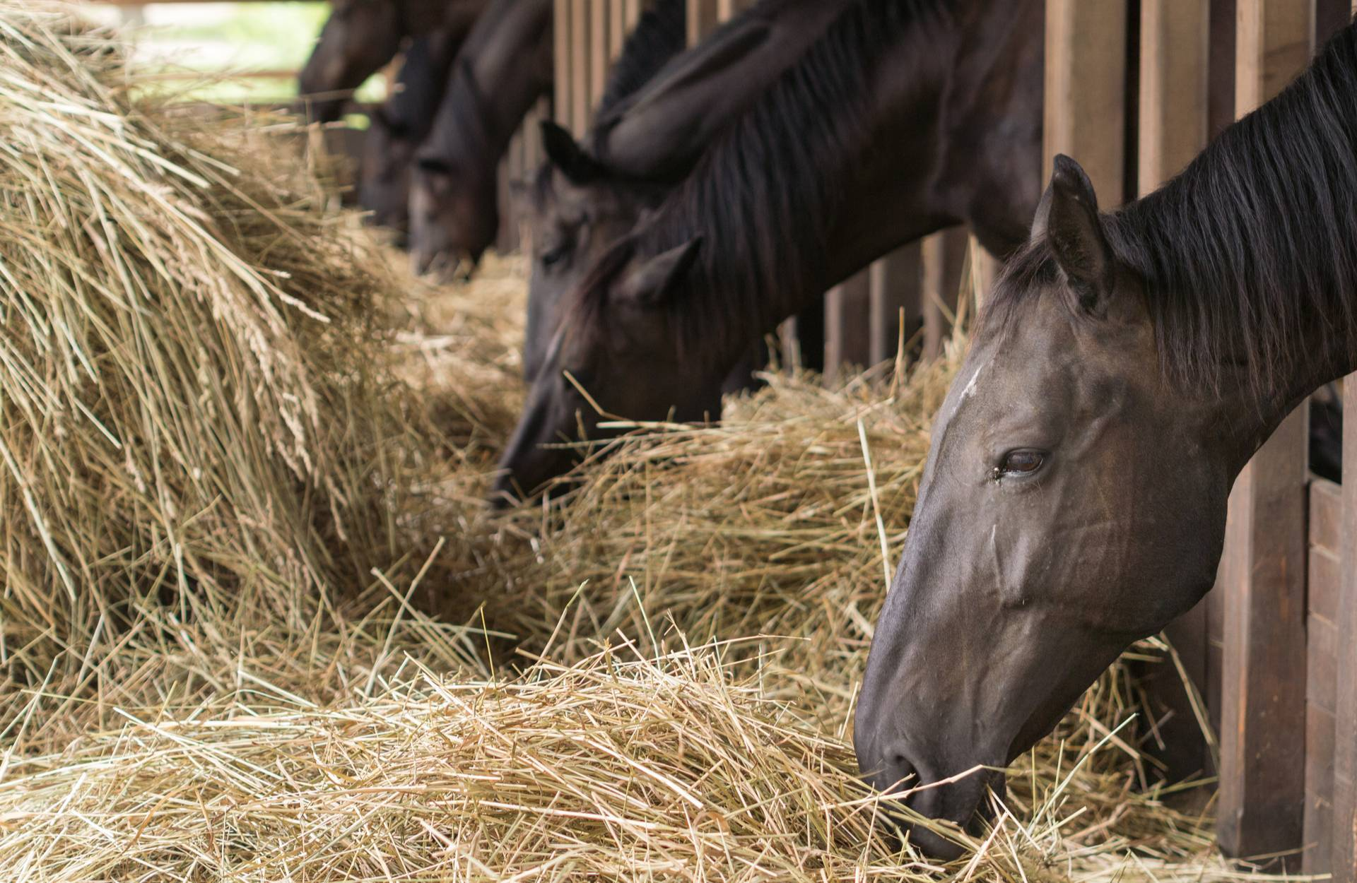 Managing the Heatwave & Your Budget with Our Horse Shavings in Derbyshire