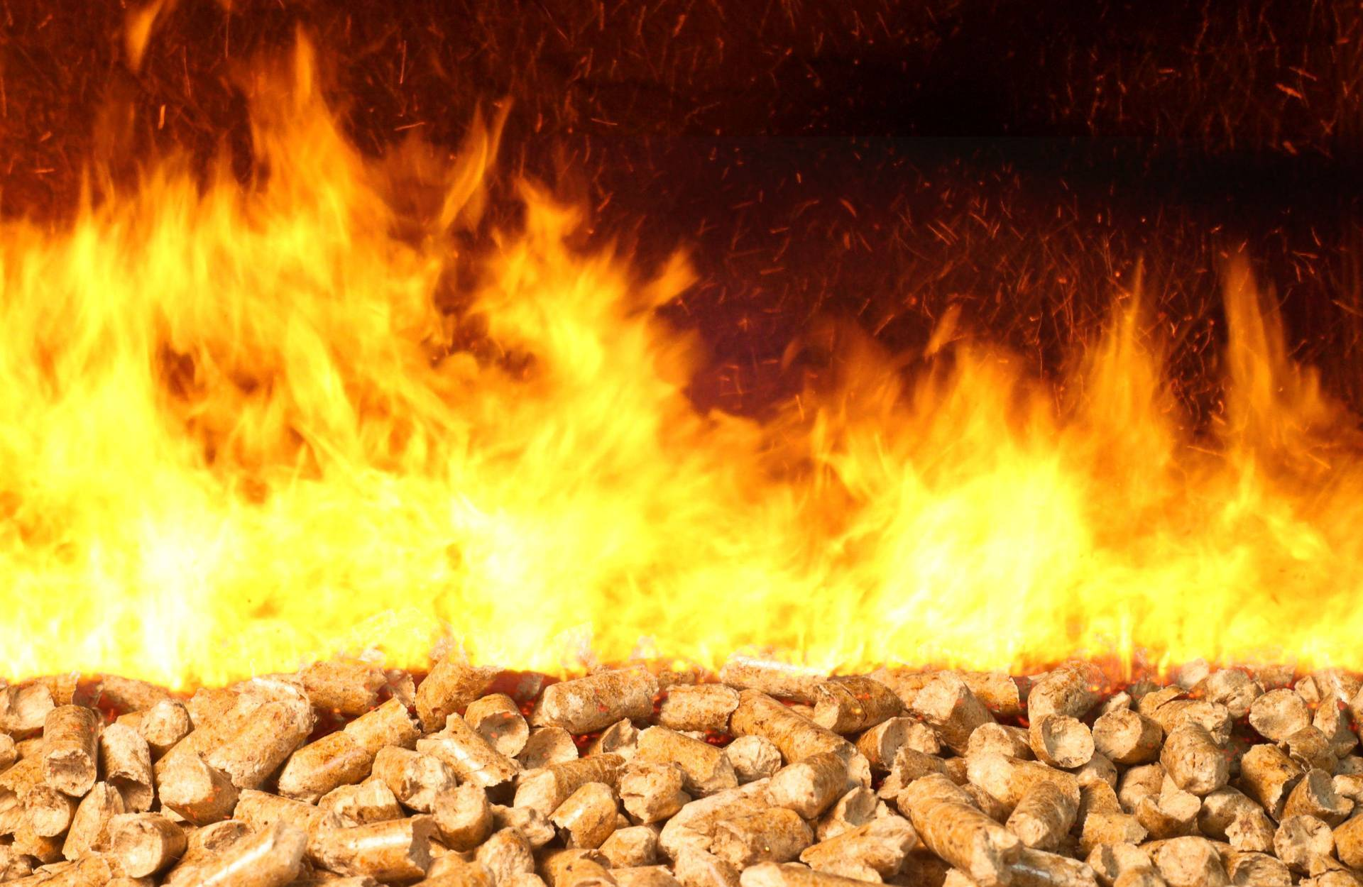 Understanding Biomass Fuel and the Renewable Heat Incentive