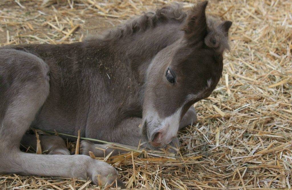 Remain an Optimum Health for Your Show Horses with Our Horse Bedding in Staffordshire