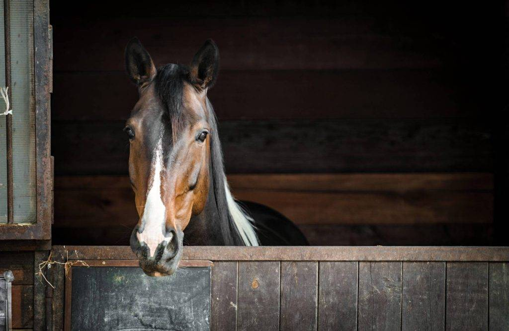 Prepare for Autumn with Our Horse Bedding in Derbyshire