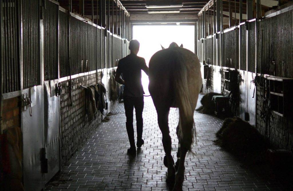 Maintain Warmth in Your Stables with Our Horse Bedding in Staffordshire