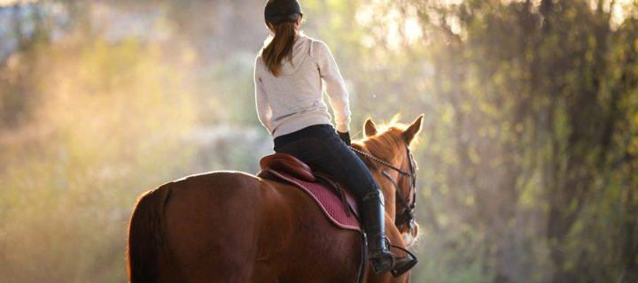 7 Ways to Keep a Stabled Horse Happy
