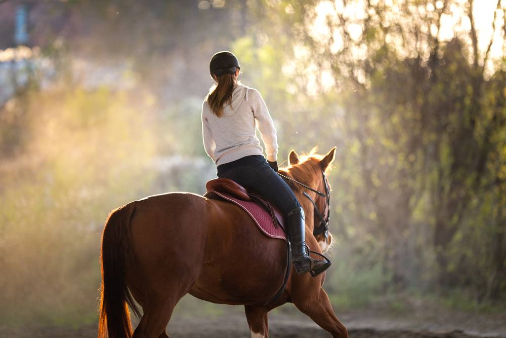How Equine Bedding Keeps Horses Comfortable in the Summer
