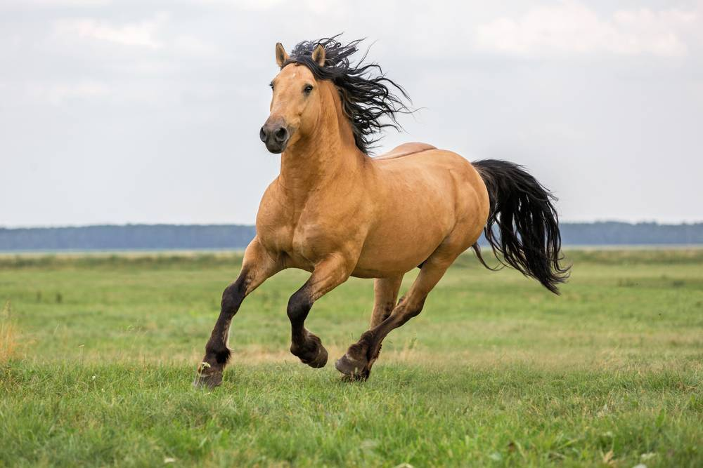 How High Quality Horse Bedding Deals with Allergies