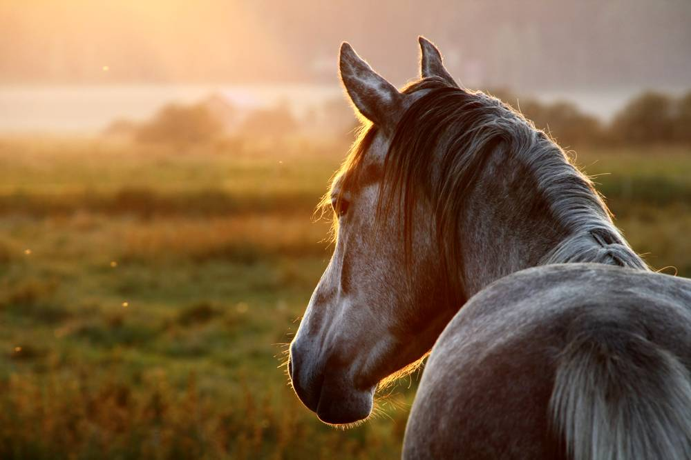 Comparing the Different Types of Equine Bedding