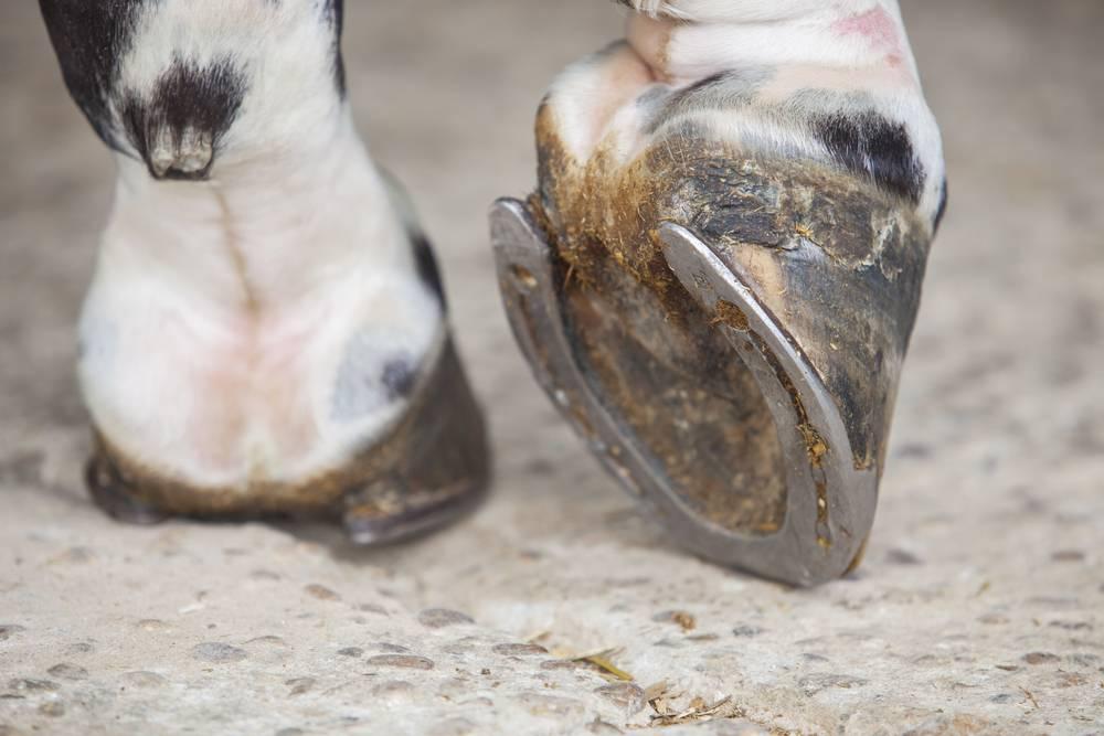 How Innovative Hoofwear Helps Keep Horses Healthy