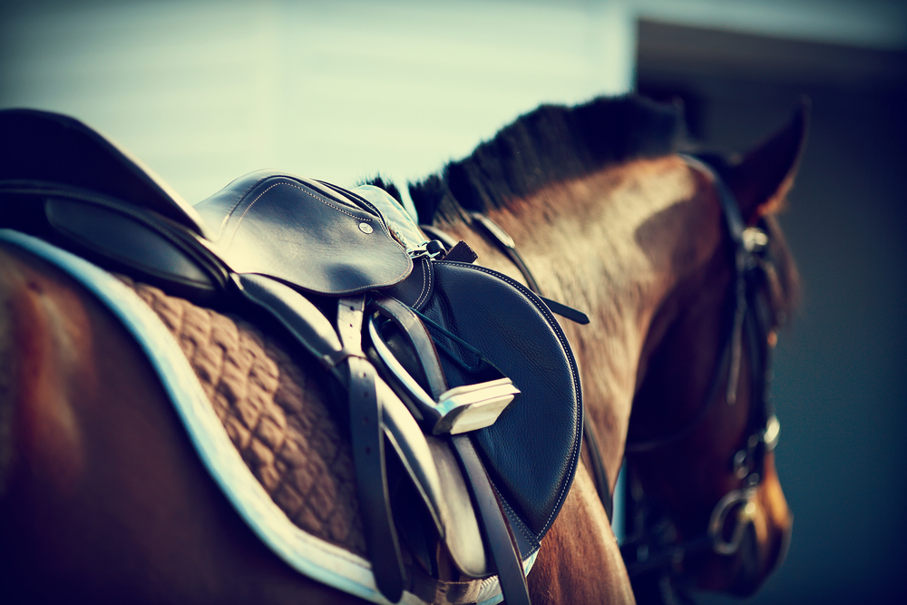 Getting Your Horse Back Into Routine