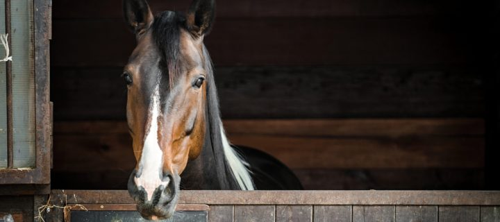 Explaining Stable Management and Equine Bedding