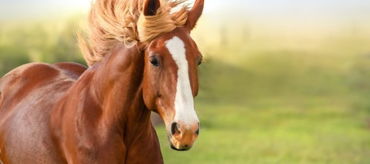 Understanding the Basics of Horse Bedding
