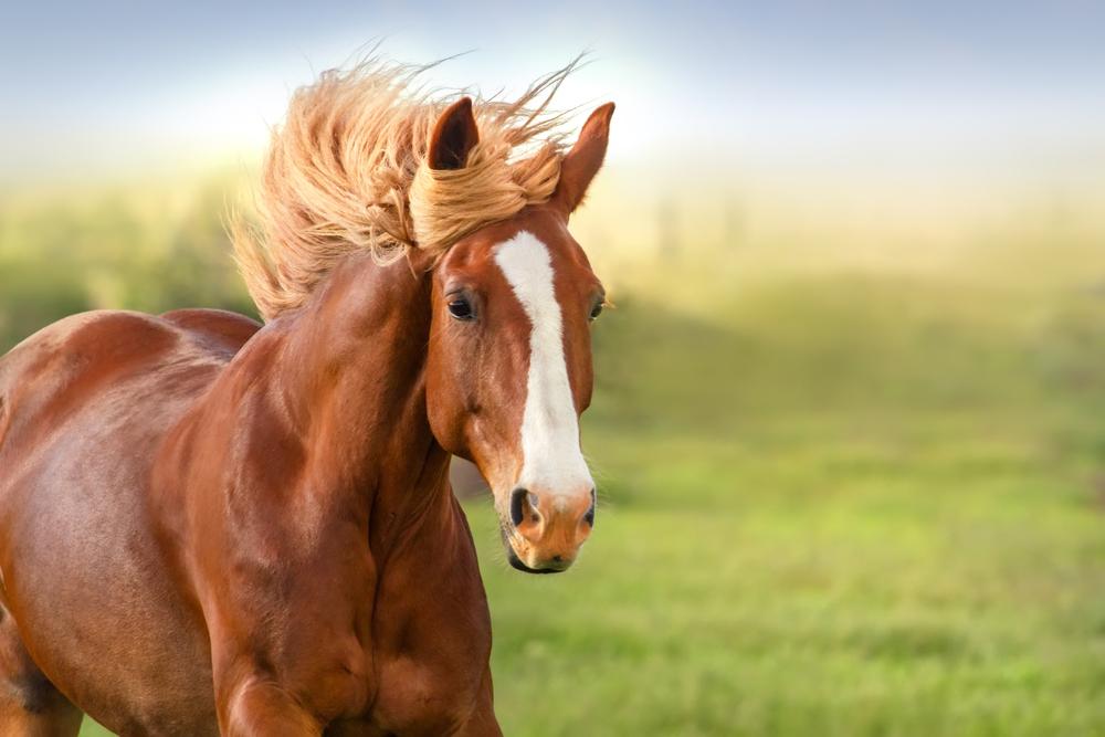 Understanding the Basics of Horse Bedding