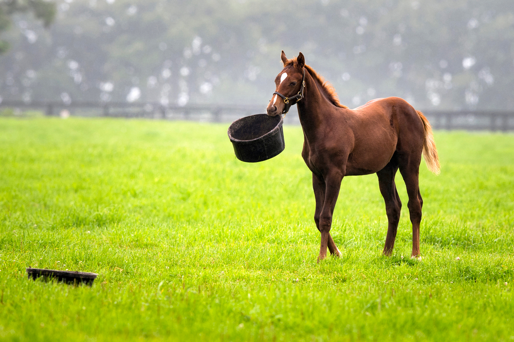 How to Deal With Equine Obesity