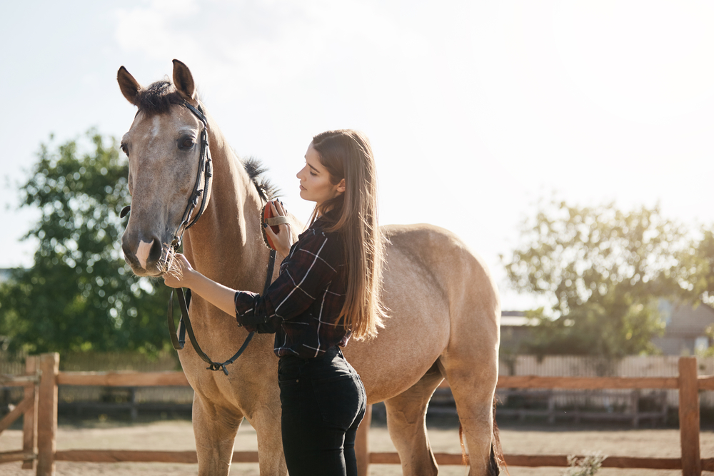 How to reduce heat stress in horses