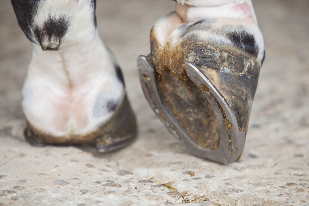 Your Cleaning Guide for Horses Hooves